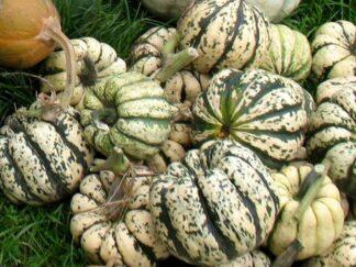 Тыква обыкновенная 'Sweet Dumpling', семена