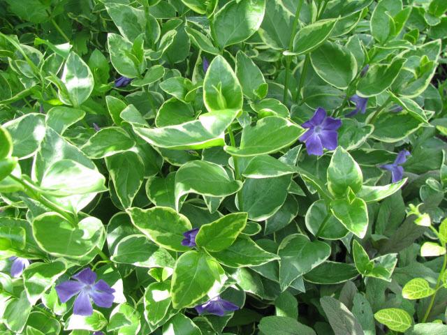lіkuvannya varicosa la ternopoli