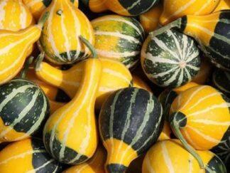 Гарбуз звичайний 'Kleine Birne Bicolor', насіння